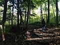 Forest Path (48966624021).jpg