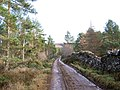Forest Track - geograph.org.uk - 308373.jpg