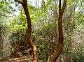 Forest at Kambalakonda in Visakhapatnam 05.JPG