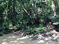 Forest near Yuinchi of Sefa-Utaki.JPG