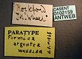 Formica argentea casent0102159 label 1.jpg
