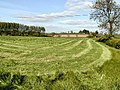 Freshly Cut Grass - geograph.org.uk - 10421.jpg