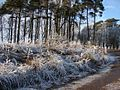 Frosty Weather (1) - geograph.org.uk - 639749.jpg