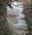 Frozen Hill Country Creek - panoramio - En el nido (Nest).jpg