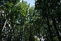 Fußweg Felsengarten Sanspareil 04082019 015.jpg