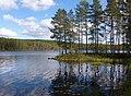 Gänsen sjö 2013b.jpg