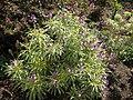 Gardenology-IMG 4747 hunt10mar.jpg