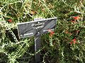 Gardenology.org-IMG 0865 hunt07mar.jpg