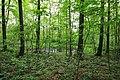 Geschützter Landschaftsbestandteil Schubertgrund in Sachsen. 2H1A1048WI.jpg