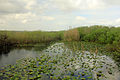 Gfp-florida-everglades-national-park-clear-pond-with-lillies.jpg