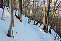 Gfp-minnesota-frontenac-state-park-windy-trail.jpg