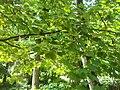 Giardino botanico di Brera (Milan 02.jpg