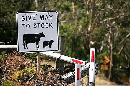 "This Australian road sign uses the less common term ""stock"" for livestock. Give Way To Stock (6759026099).jpg"