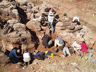 Gladysvale Cave - Students on a field school working in the Gladysvale external deposits