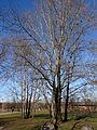 Gleisdreieckpark 17.02.2014 10-11-20.JPG