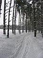 Glenmore forest - geograph.org.uk - 133890.jpg