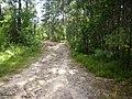 Gmina-Krzywda-las-090809-2.jpg