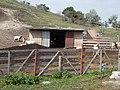 Goat farm, Inota, 2017 Várpalota.jpg