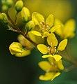 Golden Hues (2557337499).jpg