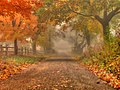 Gravel roadway early autumn - Colts Neck (4085143757).jpg