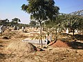 Graveyard Chak No. 53-2-L, Okara - panoramio.jpg