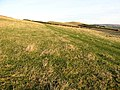 Grazing field - geograph.org.uk - 638701.jpg