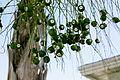 Green (2987163408).jpg