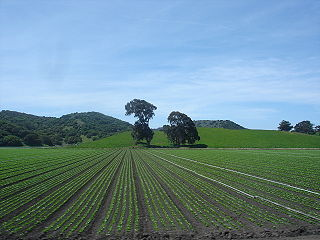 Salinas Valley valley in Monterey County, California, United States