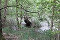 Grosses Torfmoor Wald O03.jpg