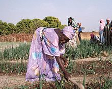 Women And Agriculture In Sub Saharan Africa Wikipedia