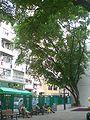 HK Sheung Wan Kau U Fong Children's Playground 2.JPG