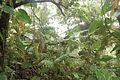 Habitat at the type locality of Thecadactylus oskrobapreinorum on Sint Maarten, Lesser Antilles - ZooKeys-118-097-g005.jpg