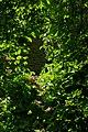 Hagen Wasserschloss Werdringen IMGP4378 wp.jpg