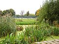 Haggerston park 1.jpg