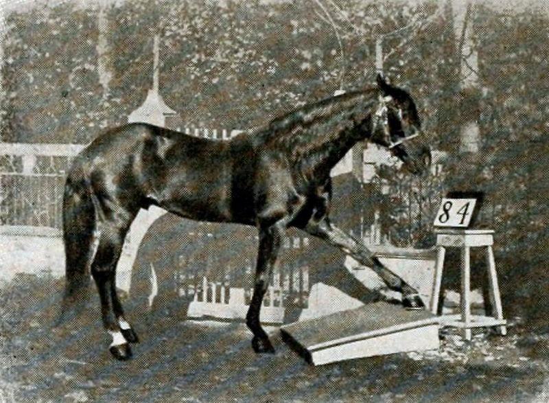 Hans, nuestro amigo el caballo