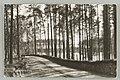 Harjutie, Punkasalmi, Äijönlahti, Th. Sunell 1930s PK0293.jpg