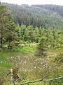 Harz strecke wernigerode brocken moor quellbereich holtemme ds wv 06 2007.jpg
