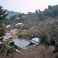 Hase-dera Temple 長谷寺 - panoramio (1).jpg