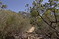 Heathcote NSW 2233, Australia - panoramio (61).jpg