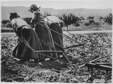 Heroic Women of France. Hitched to the plough, cultivating the soil. All agriculture rests upon their shoulders. Uncompl - NARA - 512429.tif