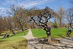 High Park, Toronto DSC 0253 (17207328829).jpg