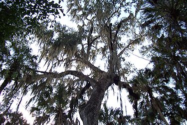 Hillsborough River State Park 10.jpg