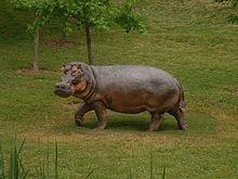Hippopotamus Gorgops Wikipedia