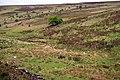 Hoar Oak Tree - geograph.org.uk - 445957.jpg
