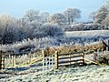 Hoar frost - Penhill Farm - geograph.org.uk - 1113319.jpg