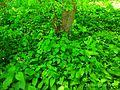 Holodny Yar forest 07.jpg