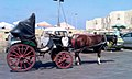 Horse and buggy 002.jpg