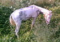 Horse in Chinawal.jpg