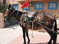 Horse power (2901317223).jpg