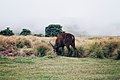 Horton plains sri lanka.jpg